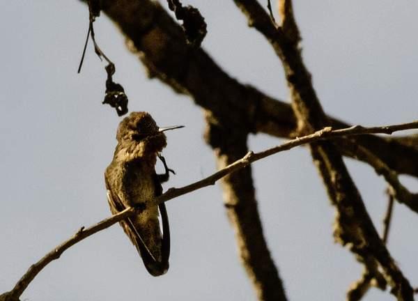 Arizona Birds (12 of 70)
