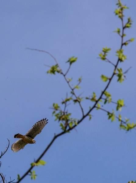 Arizona Birds (14 of 70)