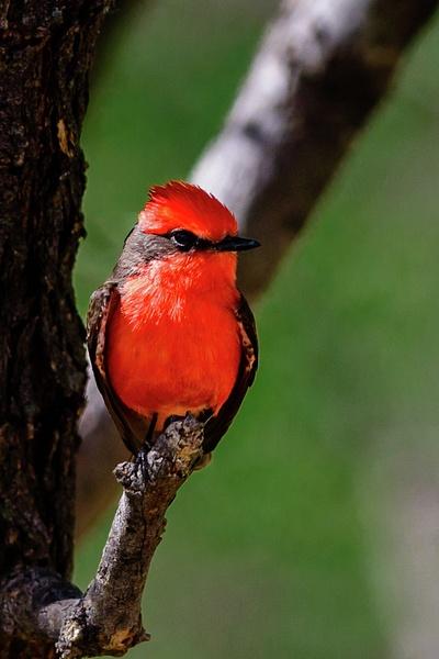 Arizona Birds (15 of 70)