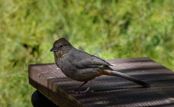 Arizona Birds (16 of 70)