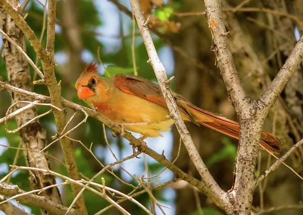 Arizona Birds (17 of 70)