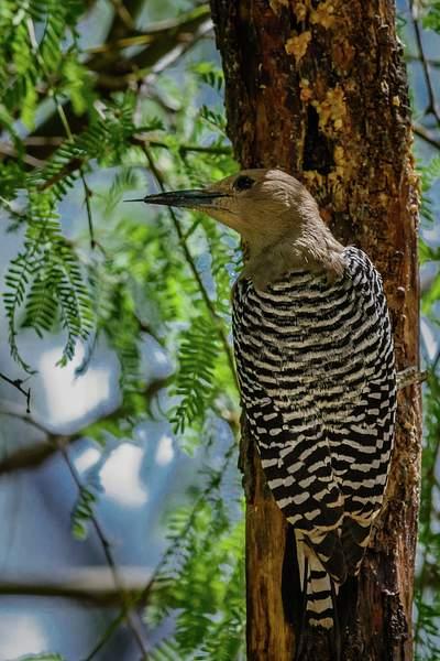 Arizona Birds (18 of 70)