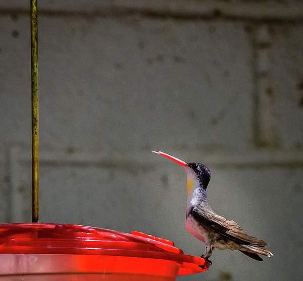 Arizona Birds (23 of 70)