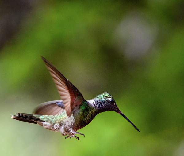 Arizona Birds (24 of 70)