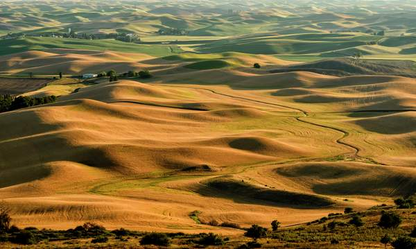 Hills and Curves In the Palouse