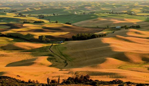 Rolling Hills of the Palouse In the Golden Hour