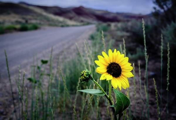 Flower At Painted Hills
