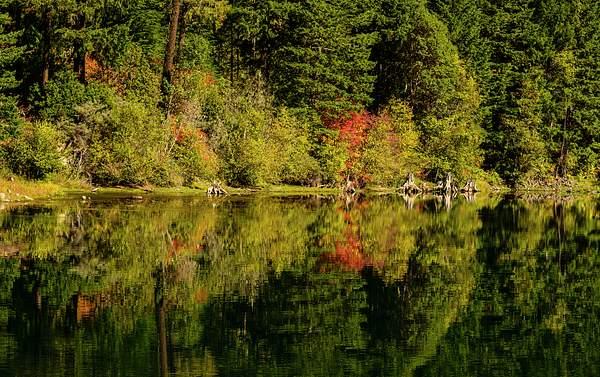 Fall Reflections in the Umpqua