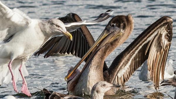 Eye To Eye and Beak To Beak sharpened(1 of 1) copy by...