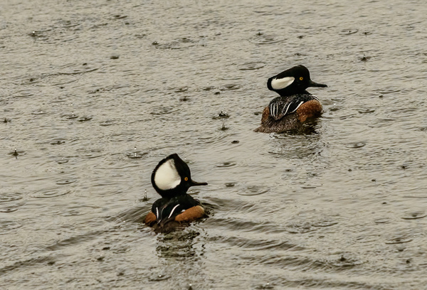 Swimming In the Rain by jgpittenger