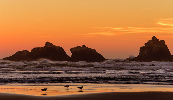 Walking in the Sunset at Bandon Rocks by jgpittenger