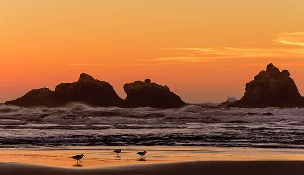 Walking in the Sunset at Bandon Rocks