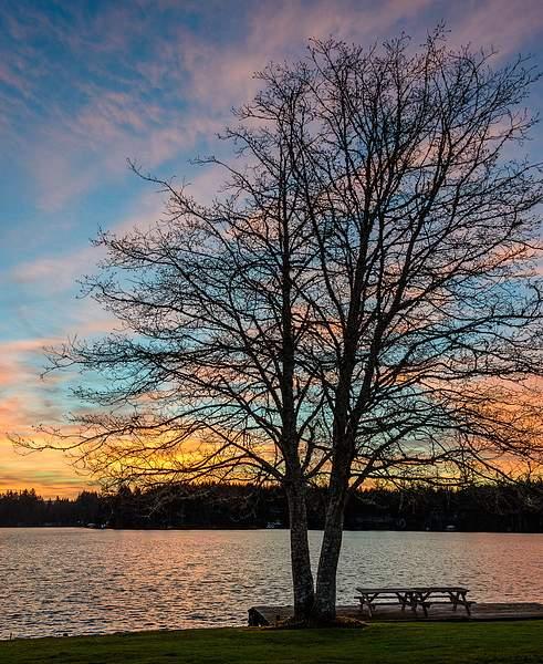 Tree-Basking-in-Sunrise-Light