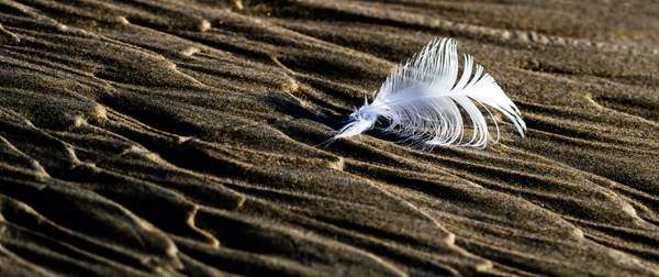 Feather-and-Sand