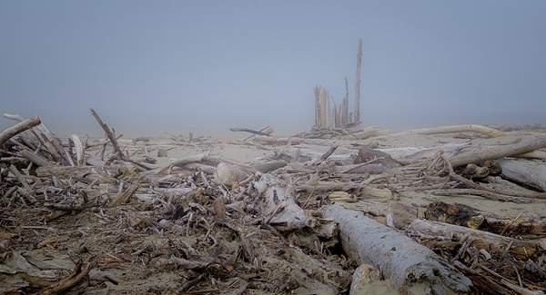 Foggy Driftwood