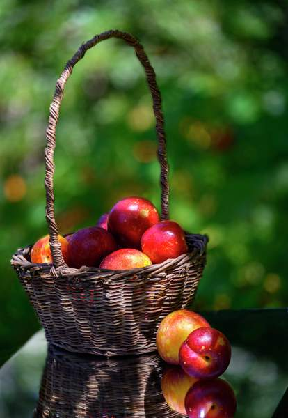 Plum Basket
