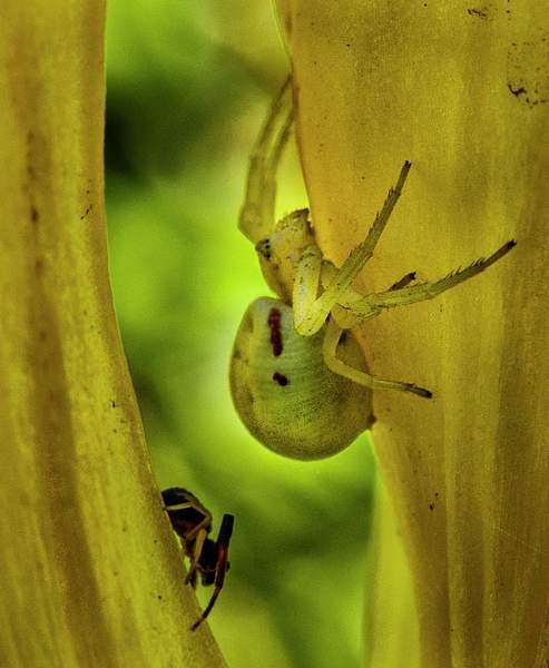 Spider Companions