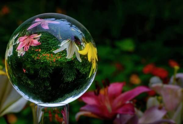 Upside Down World of Flowers