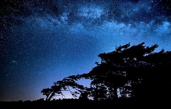 Milky Way Over Windblown Tree