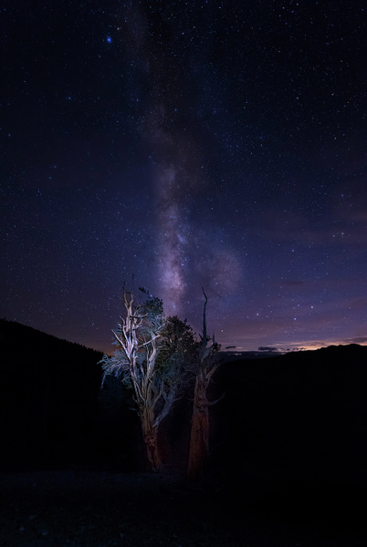 Milky Way In the Bristlecone Pines