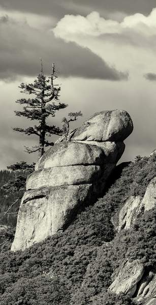 Trees and Rocks At Taft Point b and w (2 of 2)