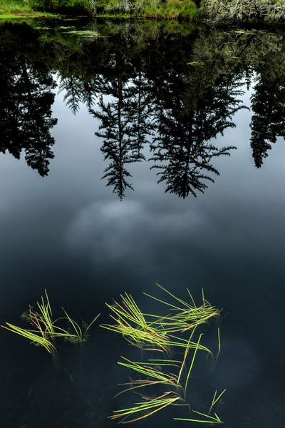 Reflections and Grass