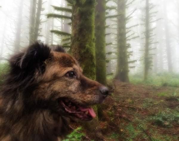 Cayenne On the Foggy Trail
