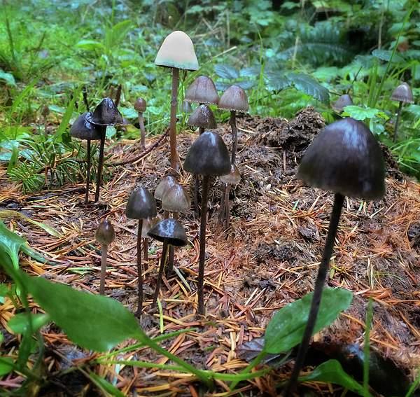 Fungus Garden