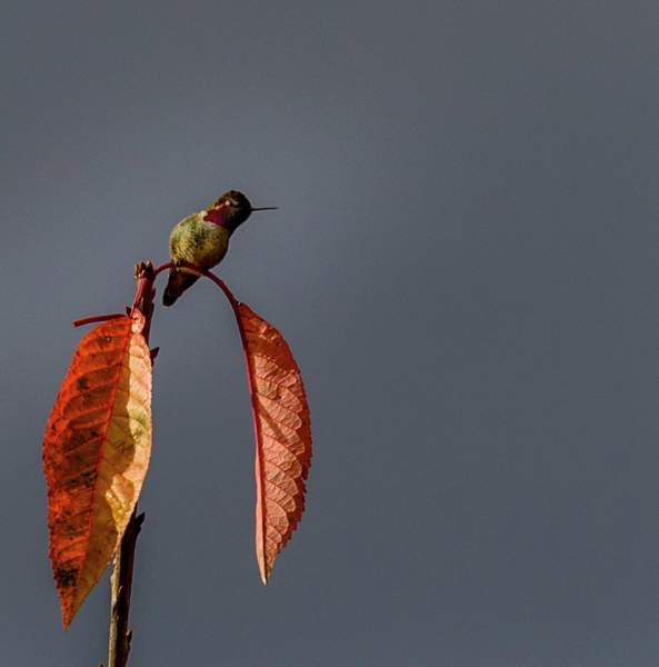 Hummer with Fall Color