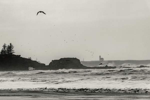 Seagulls Flying Over Stormy Sea b and w(1 of 1)