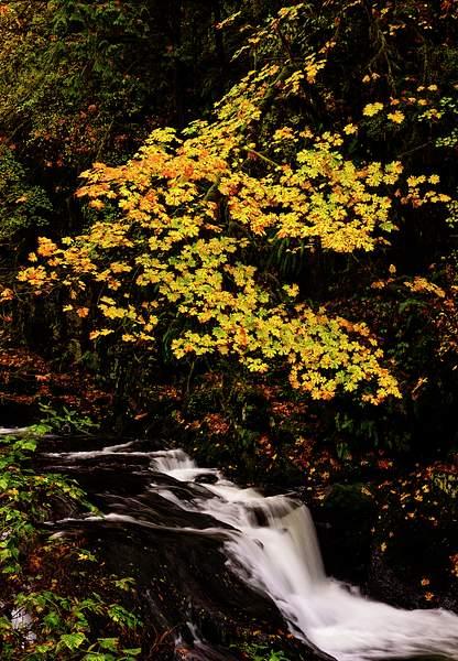Sweet Creek in the Fall
