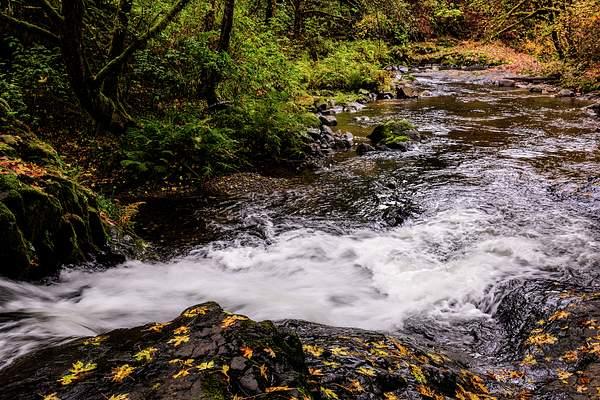 Sweet Creek in the Fall 3