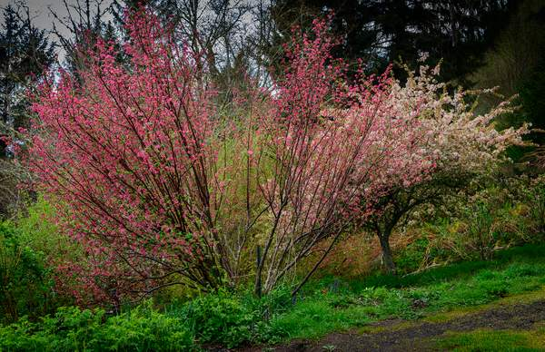Currant and Crabapple