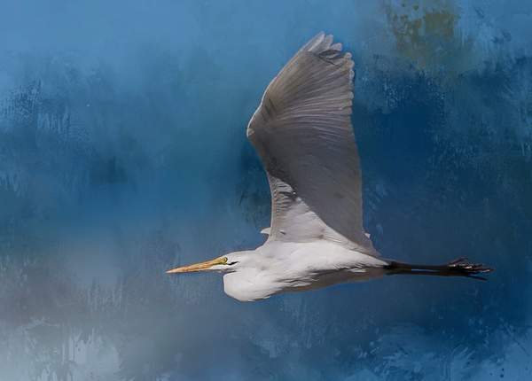 Flying White Egret with Textures
