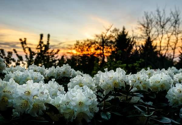 Rhody Sunset