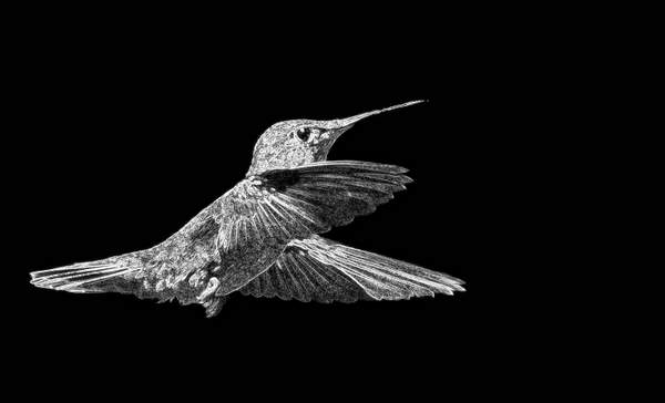 Hummer Glass in B and W