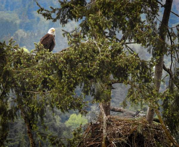 Dad and Eaglet
