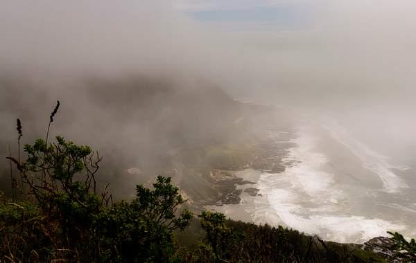 Foggy Cape Perpetua Down the Coast opy