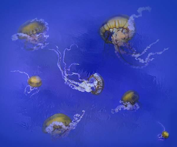 Jelly Fish Composite