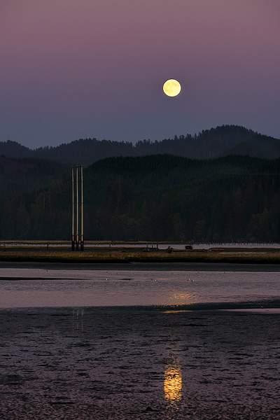 Seagulls Basking in the Full Moon Rise