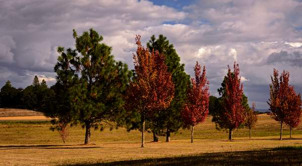 Fall Color At the Winery
