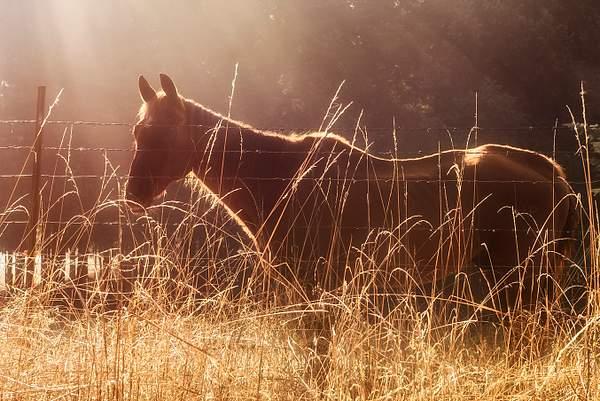 Horse in Sun Rayed Mist