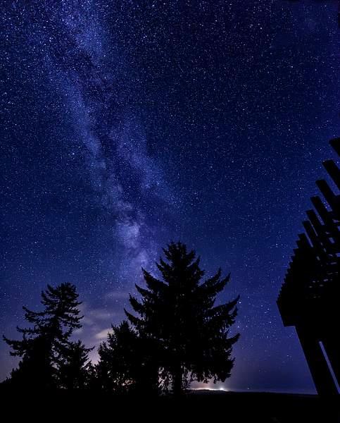 Milky Way Blooms Behind the Tree