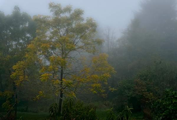 Fall Butternut in Fog