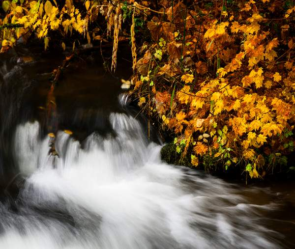 Fall Color On the Upper Rogue River