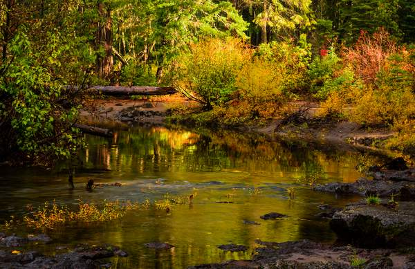 Reflections On the Upper Rogue River