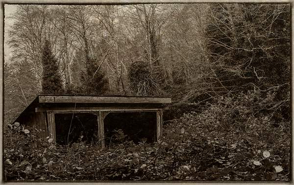 Overgrown Home In Sepia(