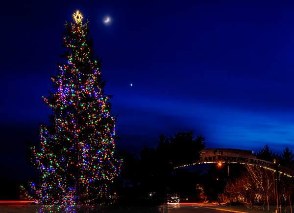 New Moon, Venus, and the Christmas Tree
