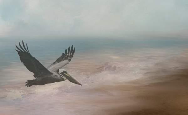 Pelican for Textures