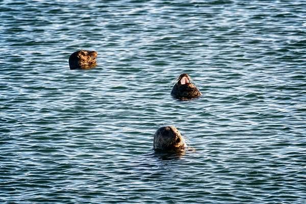 Seals Enjoying the Sun